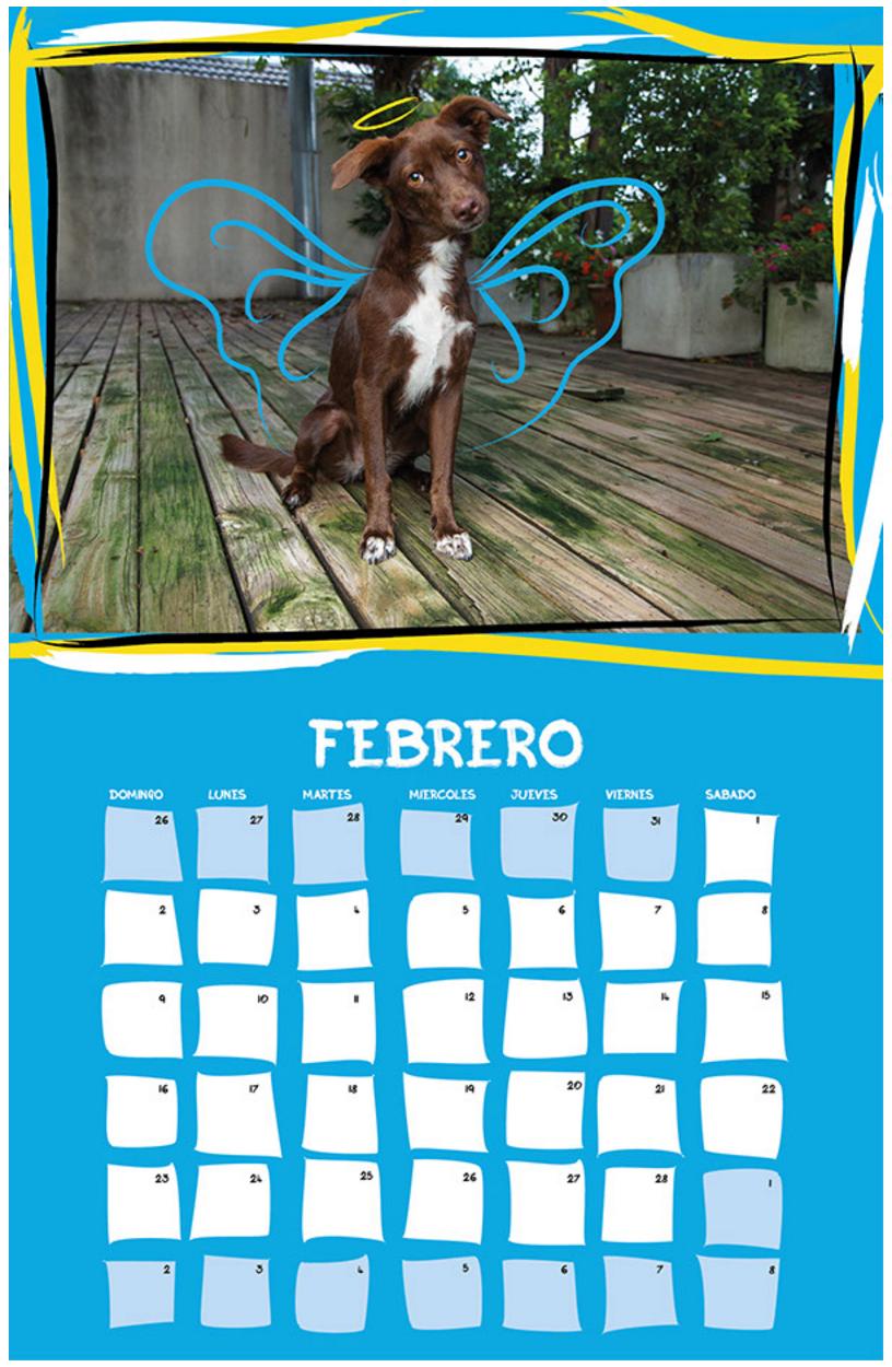 February Calendar Viva la Vida x Cuatro Patas Foto and Reyes y Reinas